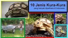 Jenis Kura Kura Darat Yang Ada Di Indonesia