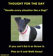 Image result for Humor Thought for the Day