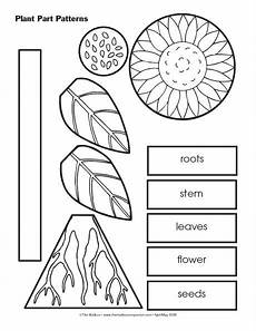 parts of plants kindergarten worksheets 13581 this resource could be incorporated into a plant unit in kindergarten or 1st grade this is a