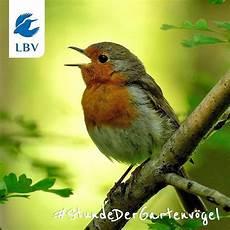 Vogel Malvorlagen Instagram Pin Landesbund F 252 R Vogelschutz Lbv Auf Instagram