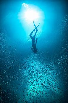 free diver with schooling fish underwater in the