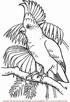 Ausmalbilder Tiere Papagei Papagei 025 Kostenlose Malvorlagen Und Ausmalbilder Auf