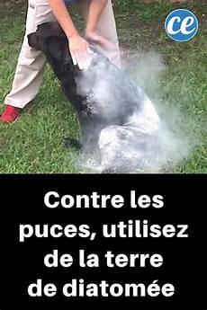 le traitement infaillible pour 201 liminer puces tiques et poux sur votre chien dogs cats and