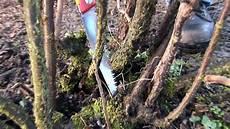 sträucher schneiden bei schnittanleitung johannisbeer str 228 ucher schneiden