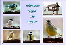 einheimische vögel im winter v 246 gel im winter foto bild tiere wildlife