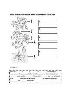 discovering plants worksheets grade 5 13532 worksheet plants worksheets plants vocabulary worksheets