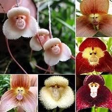 20 pcs new orchid seeds beautiful plant flower garden