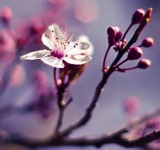 fiori di bach torino seminario fiori di bach a torino riconoscere le emozioni