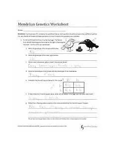mendelian genetics worksheet mendelian genetics worksheet by c kohn wuhs names directions in