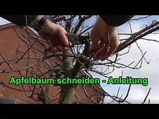 Apfelbaum Richtig Schneiden Anleitung Apfelb 228 Ume