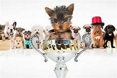 Die Beliebtesten Hunderassen 2017 Gewinner Mit G 228 Hnfaktor