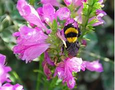 fiori di tutto il mondo foto fiori piu belli mondo
