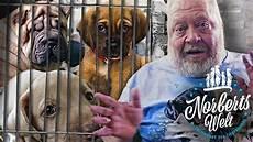zoo zajac hunde hundeverkauf im zooladen wieso geht das norberts