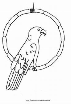 ausmalbild papagei zum ausdrucken