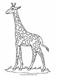 malvorlage giraffe einfach giraffen 43 gratis malvorlage in giraffen tiere ausmalen