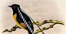cing paradis shukernature outing the false birds of paradise inning a