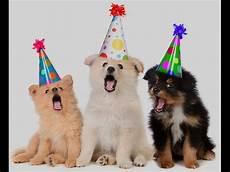 Happy Birthday Dogs Song Happy Birthday