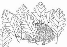 Ausmalbild Igel Winterschlaf Ausmalbilder Herbst Basteln Gestalten