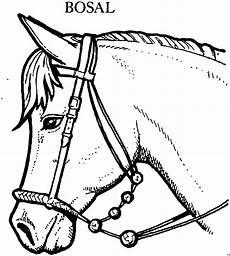 pferd mit bosal ausmalbild malvorlage tiere