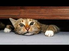 The Best And Funniest Cat Moments Cat