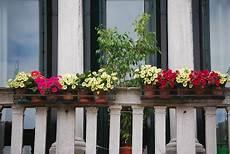 fiori da davanzale fiori a venezia