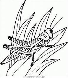 Malvorlagen Insekten In Insekten 65 Gratis Malvorlage In Insekten Tiere Ausmalen