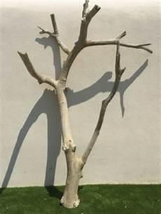 arbre mort achat arbre mort achat vente d arbre mort