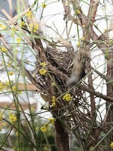 welcher vogel baut welches nest materiallager f 252 r v 246 gel