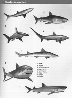 Bertahan Dari Serangan Ikan Hiu Di Laut Serial Survival