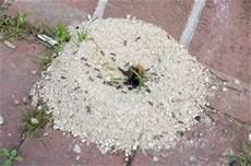 Ameisen Jetzt Schnell Und Sicher Bek 228 Mpfen Bewertet De