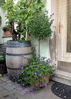 Pflanzkübel Modern Bepflanzen - unsere beliebtesten k 252 belpflanzen geh 246 lze plants