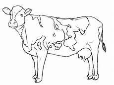 coloring pages of a cow coloring home