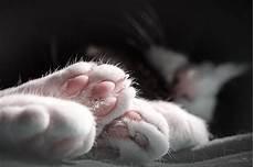 gute nacht foto bild tiere haustiere katzen bilder