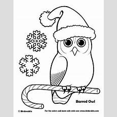 barred owl coloring page