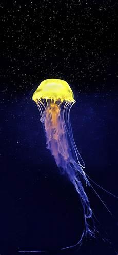 iphone x wallpaper jellyfish jellyfish wallpaper for iphone x 8 7 6 free
