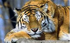 Animals Wallpapers Cool Animals cool backgrounds of animals wallpaper cave