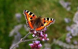 10 Great Nectar Plants For Butterflies And Moths  The