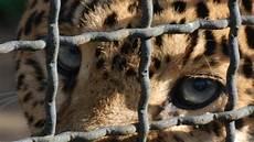 animali in gabbia petizione 183 no allo zoo 183 change org