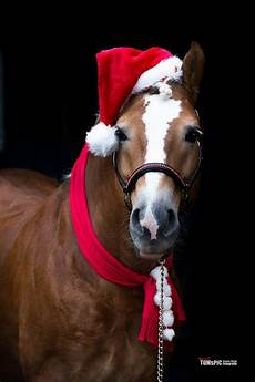 tacchi a cavallo merry
