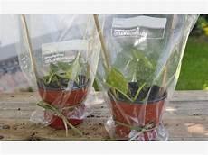hortensien durch stecklinge vermehren garten