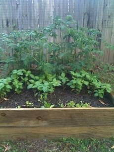 tomaten im hochbeet die top 10 der besten pflanzen f 252 r ein hochbeet plantura