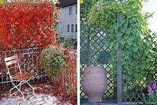 11 Id 233 Es De Brise Vue Pour Jardin Plante Haie Bambou