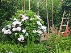 wieviel hortensien kann ich auf 4 meter l 228 nge pflanzen