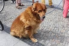 dogs of berlin germany treats a la bark