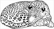 Ausmalbilder Leopard Ausdrucken Pin Blackmamba Auf Raubkatzen Vorlagen Ausmalbilder