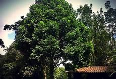 simbolos naturales tachira tachira s 237 mbolos naturales