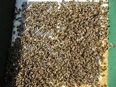 Erste Fr 252 Hjahrsnachschau Bei Den Bienen Imkerei
