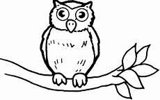 Sketsa Hitam Putih Gambar Burung Hantu Merak