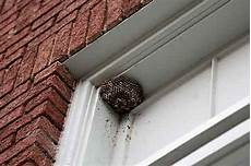 nid de guepes tarif nid de gu 234 pes 4 solutions efficaces pour s en d 233 barrasser