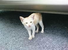 Meowingcat Kucing Jalanan Part 3